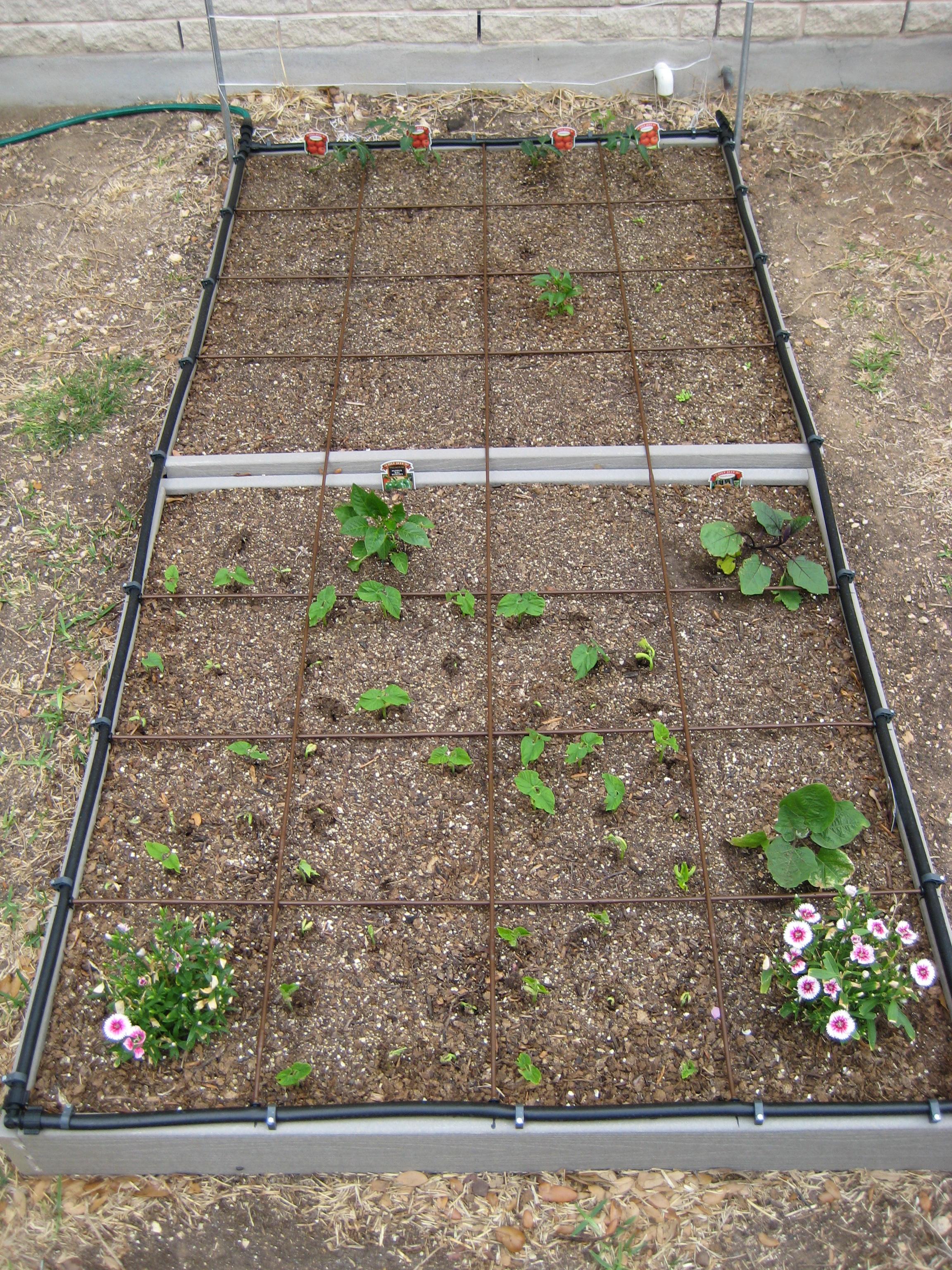 how to do a raised garden photo - 2