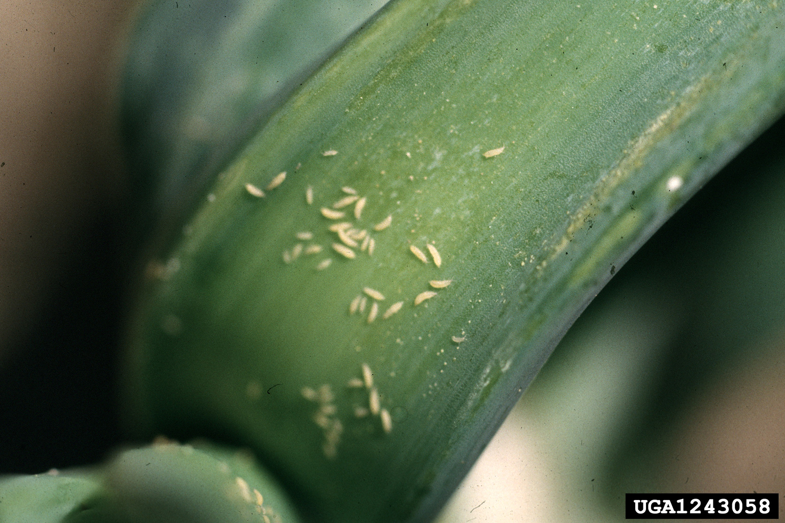 how to get rid of garden pests photo - 2
