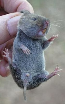 how to get rid of moles in your garden photo - 1