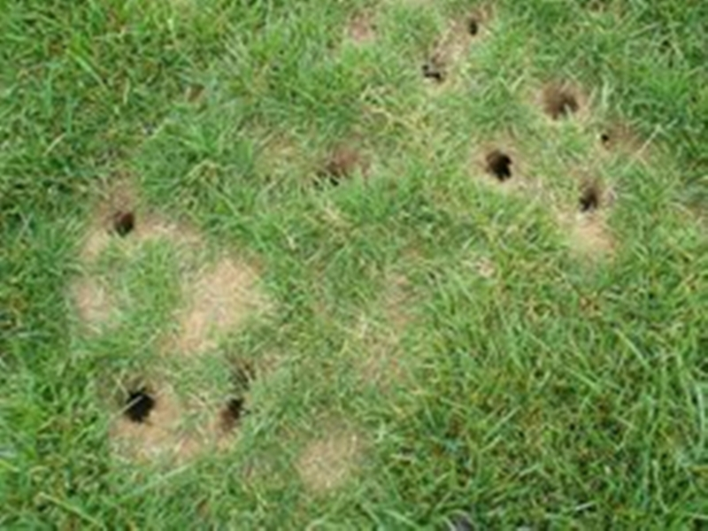 how to get rid of moles in your garden photo - 2