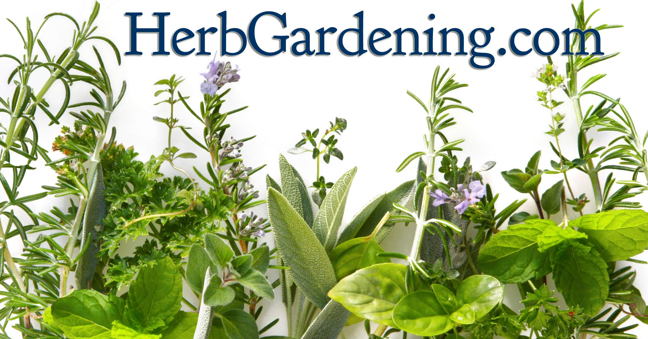 how to grow an herb garden photo - 1