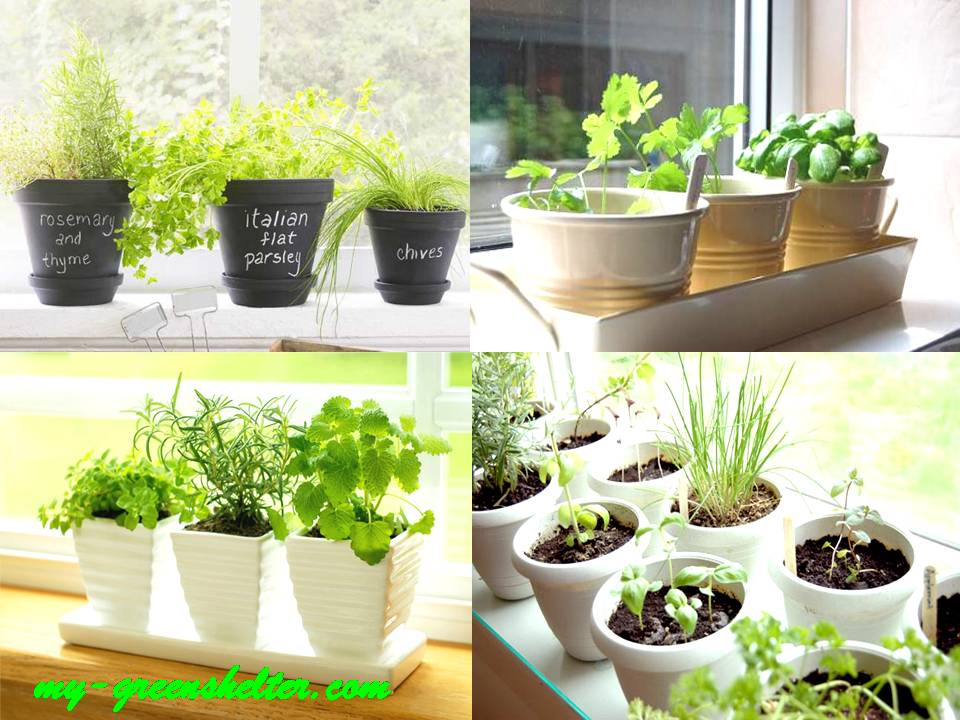 how to grow indoor herb garden photo - 1