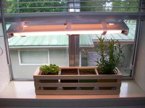 how to grow indoor herb garden photo - 2