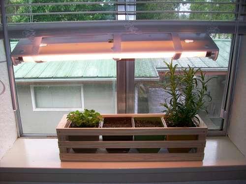 how to grow indoor herb garden photo - 2