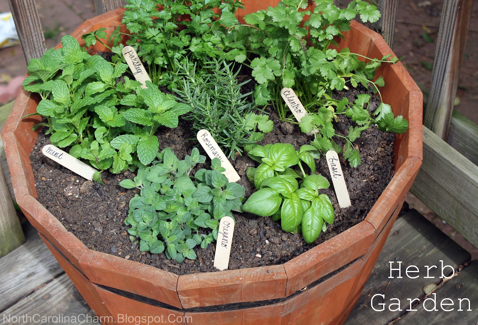 how to herb garden photo - 1