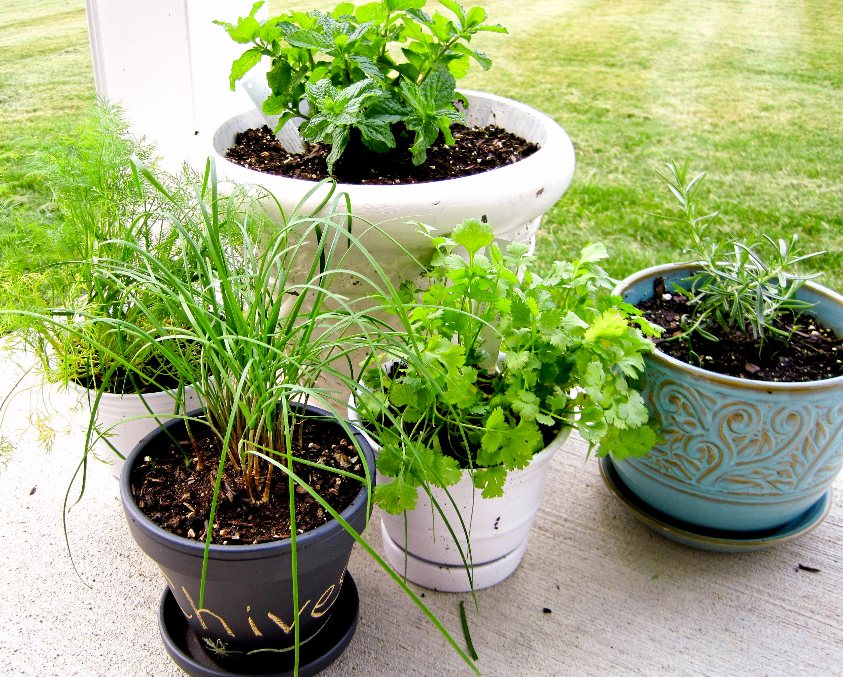 how to herb garden photo - 2