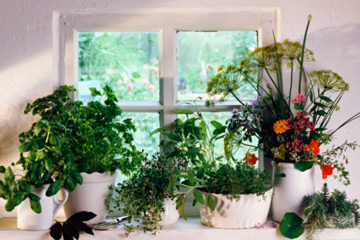 how to indoor herb garden photo - 1