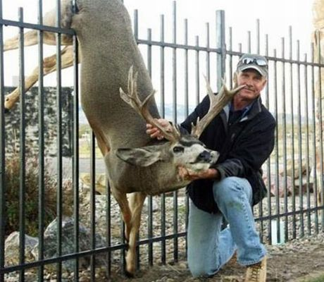 how to keep deer away from your garden photo - 1
