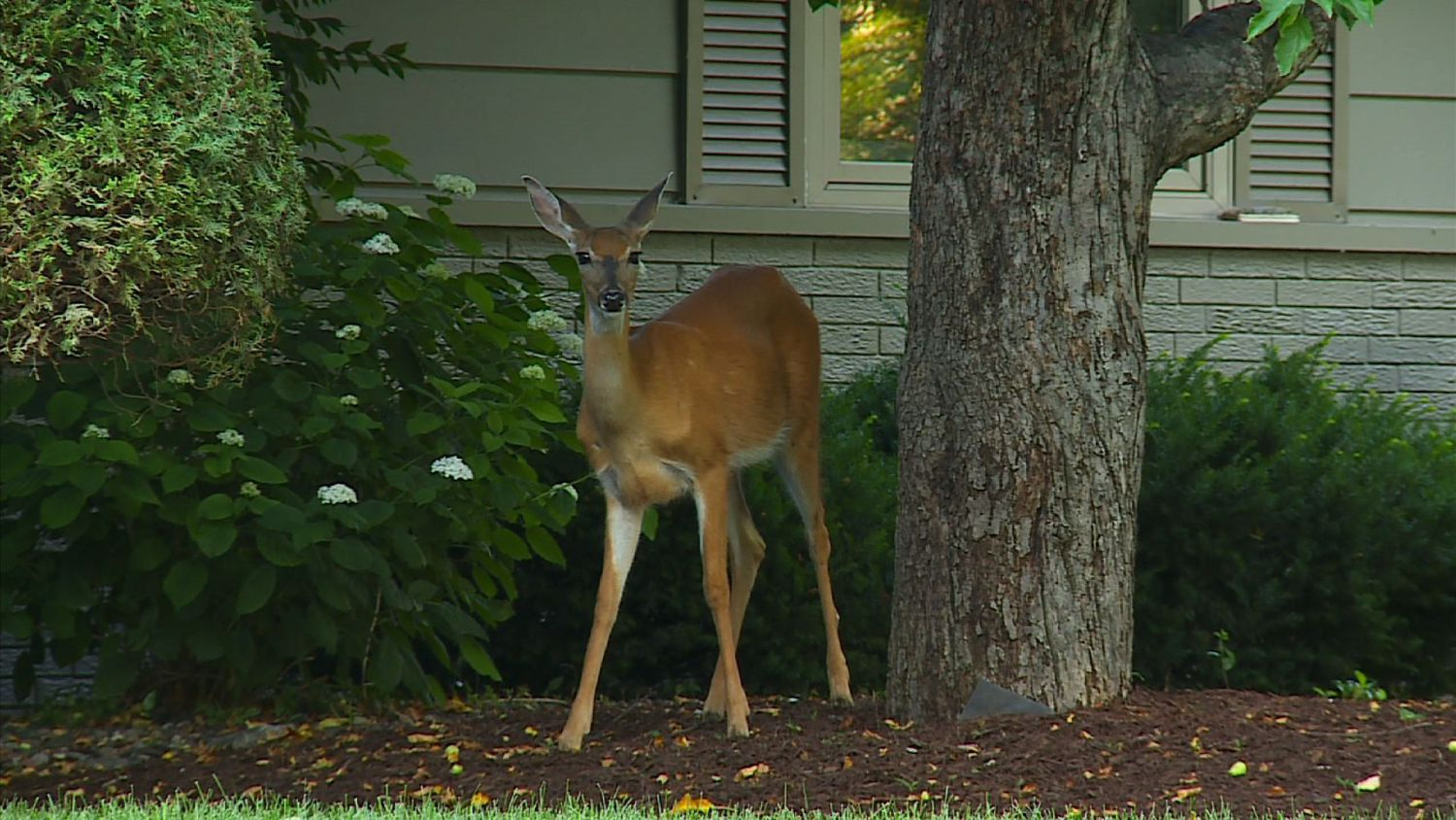 how to keep deer away from your garden photo - 2