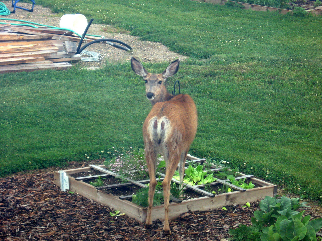 Nice How To Keep Deer Out Of A Garden