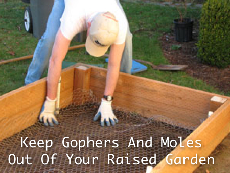 how to keep moles out of your garden photo - 1