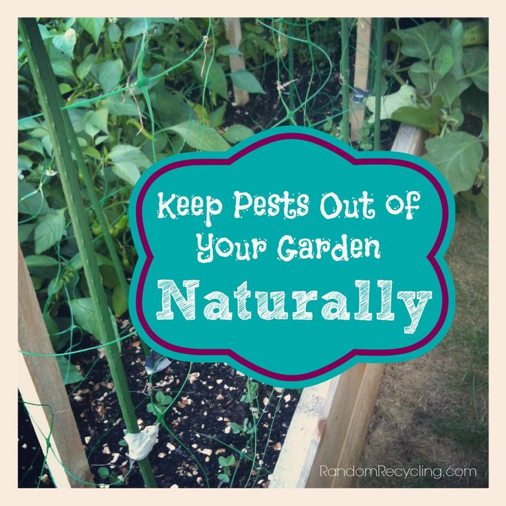 how to keep pests out of your garden photo - 2