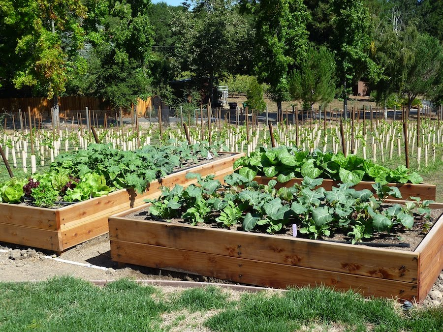 How To Make A Box Garden For Vegetables Large And Beautiful