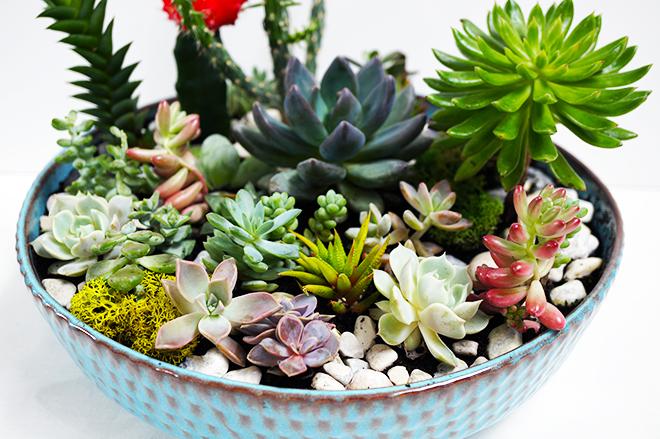 how to make a cactus garden photo - 2