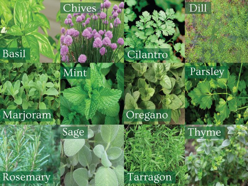 how to make a herb garden photo - 1