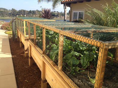 how to make a raised bed vegetable garden photo - 2