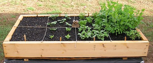 How to make a small garden box large and beautiful photos Photo