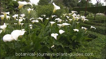 how to plant a bulb garden photo - 1