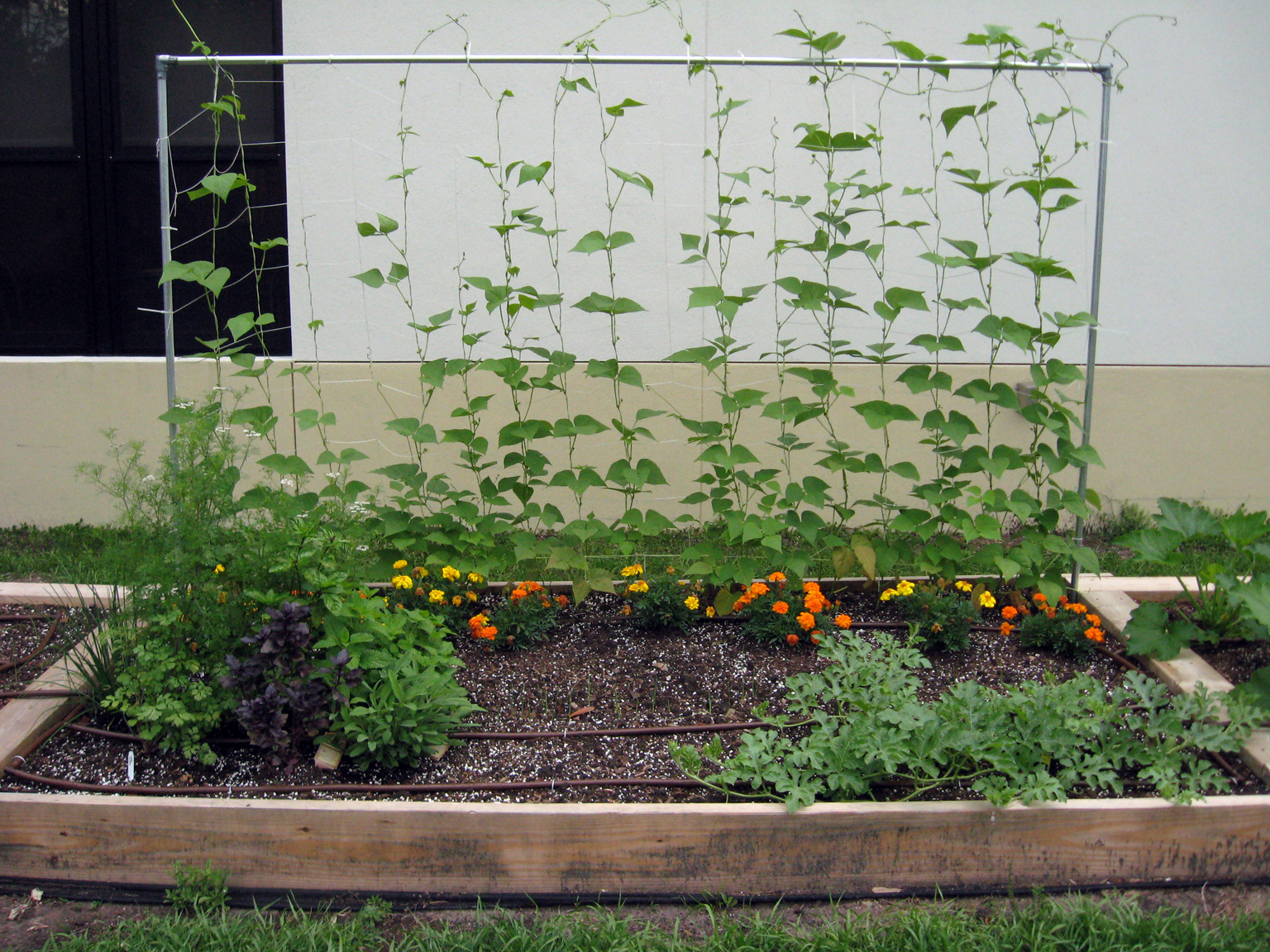 How to plant a raised garden large and beautiful photos Photo