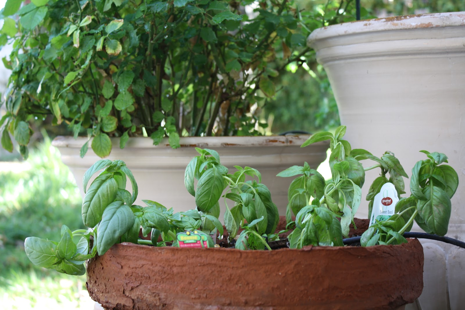 how to plant an herb garden photo - 2