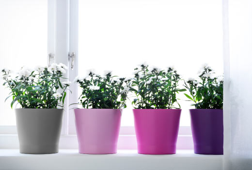 how to plant an herb garden in pots photo - 1