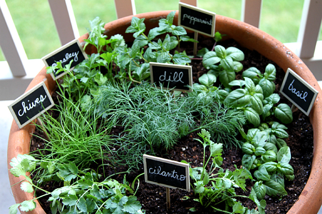 how to plant an indoor herb garden photo - 2