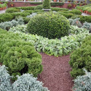how to plant herb garden photo - 1