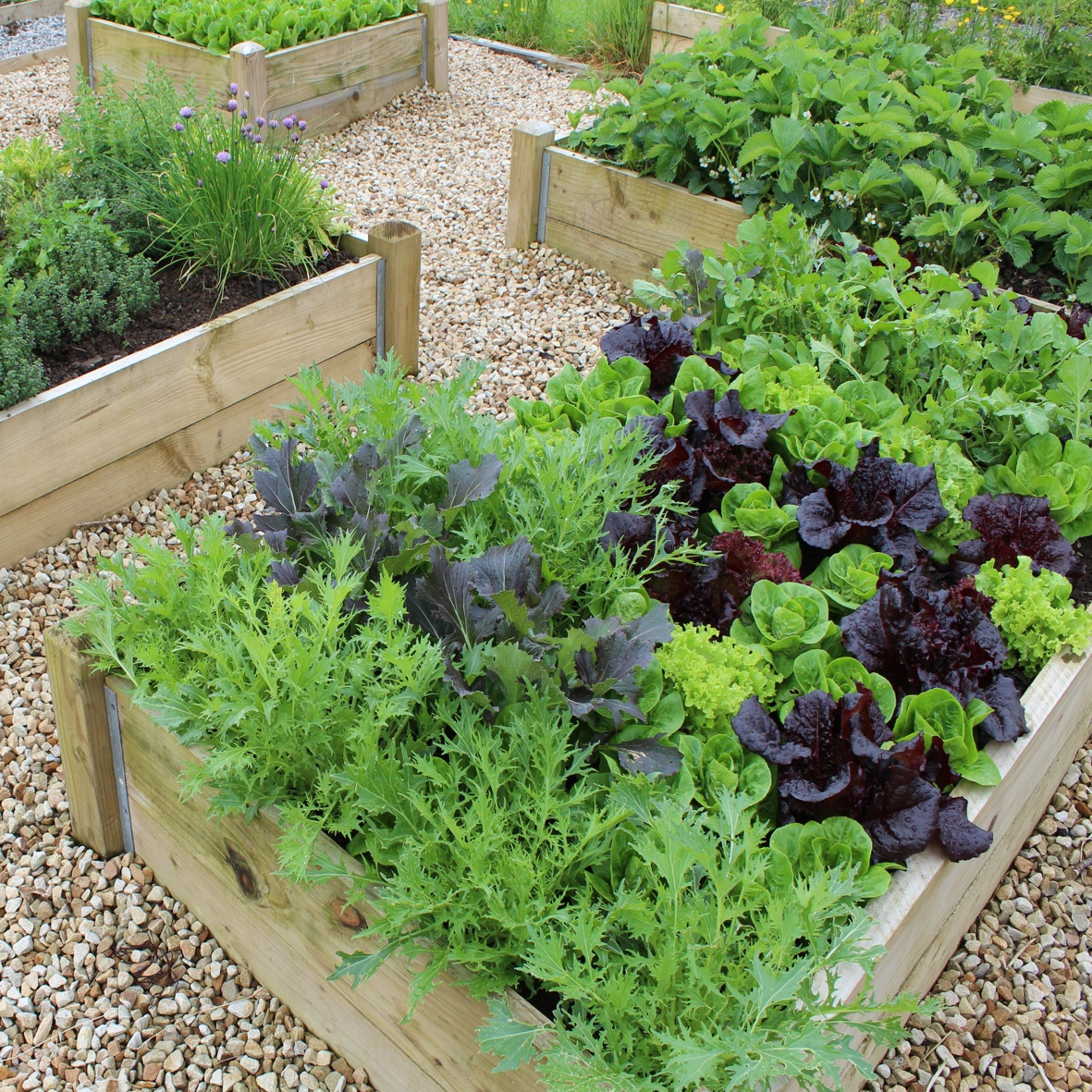 how to prepare a raised garden bed photo - 1
