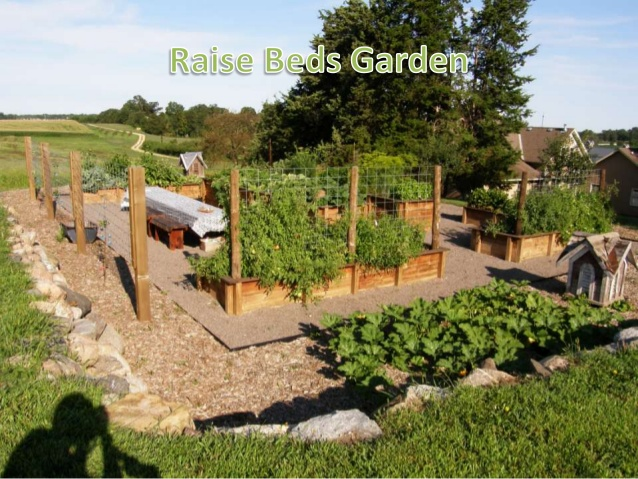 how to start a raised garden photo - 1