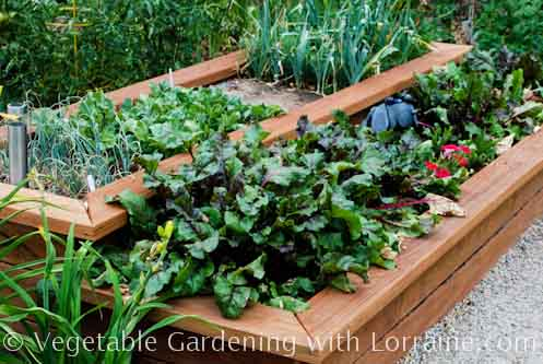 how to start a raised vegetable garden photo - 1