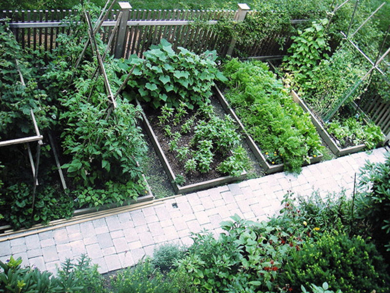 how to start a vegetable garden bed photo - 1