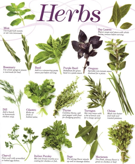 How to start an herb garden large and beautiful photos Photo to