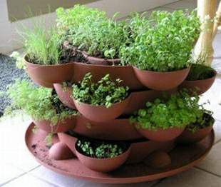 how to start an herb garden indoors photo - 1