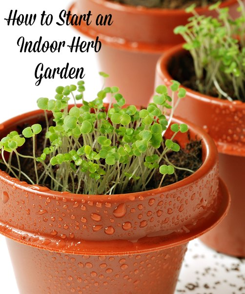 How to start an herb garden indoors large and beautiful photos