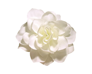 how to take care of gardenia photo - 1