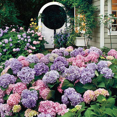 how to take care of gardenias photo - 2