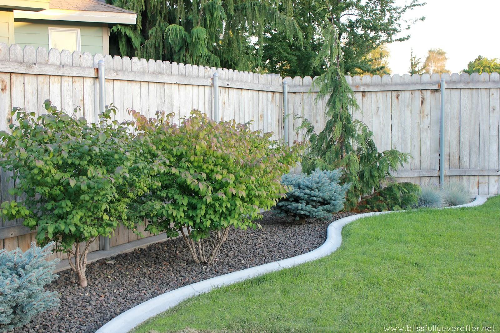 landscape for backyard photo - 2