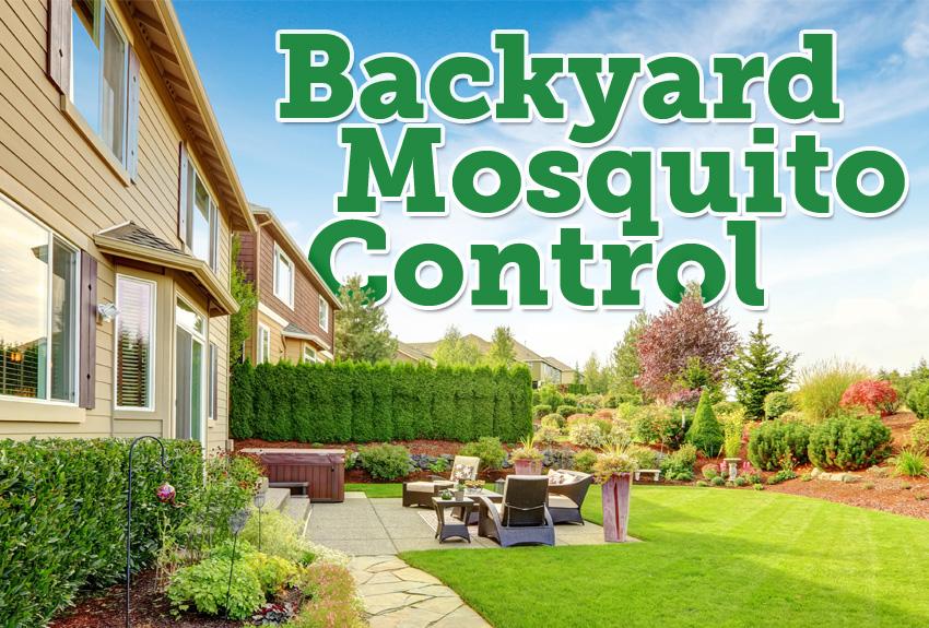 mosquito backyard control photo - 1