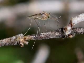 mosquito problem in backyard photo - 1