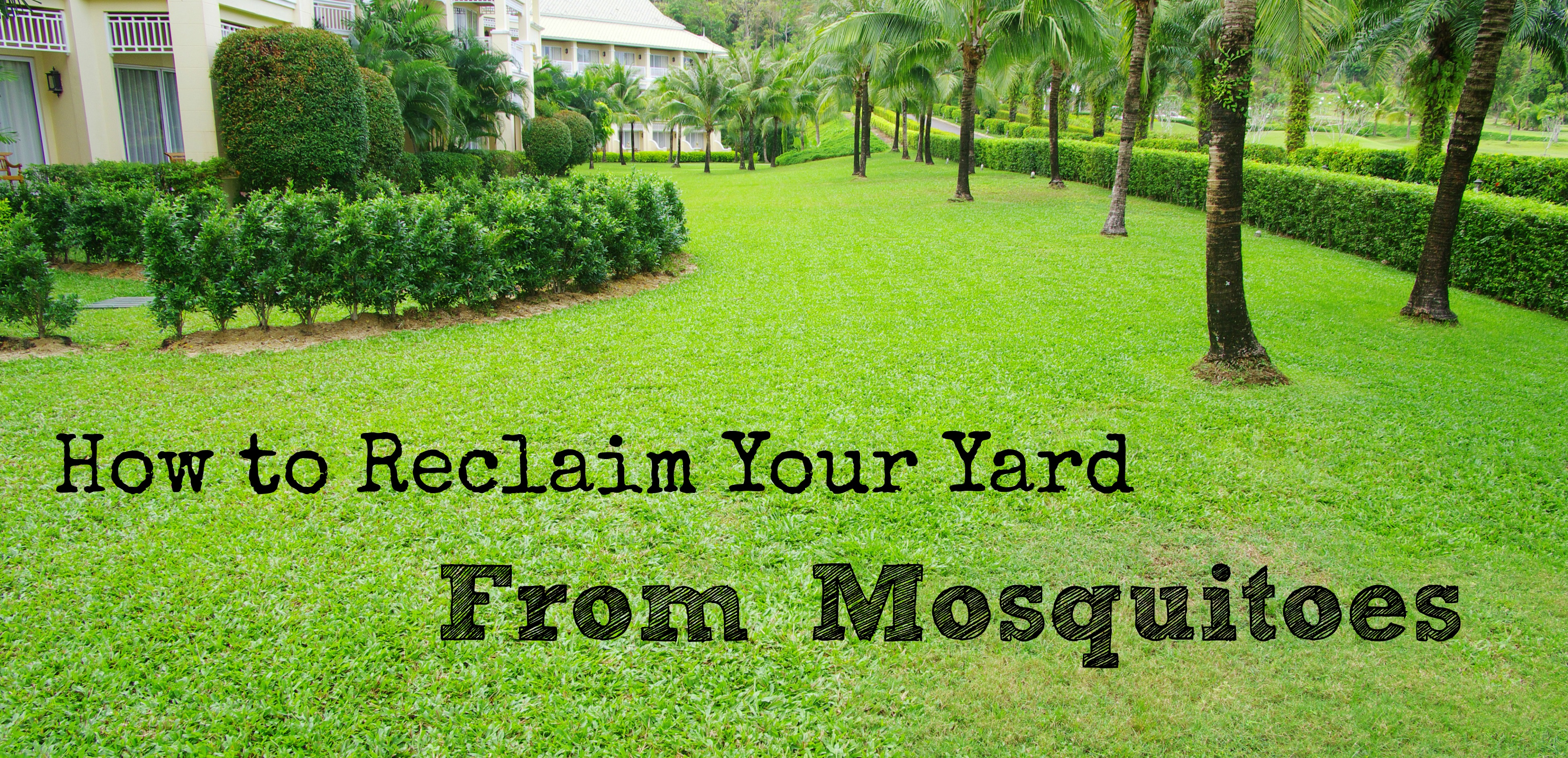 mosquitoes in backyard large and beautiful photos photo to
