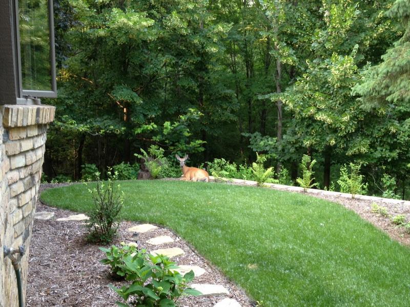 nice backyards ideas - Nice Backyard Designs