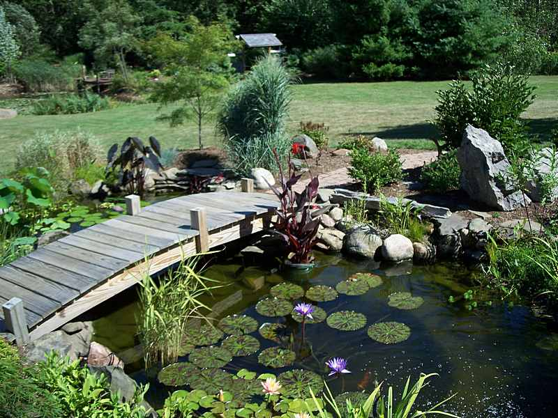 pictures of backyard ponds photo - 2