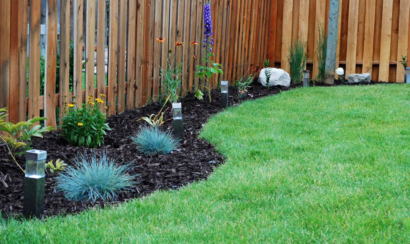 plants for backyard landscaping photo - 1