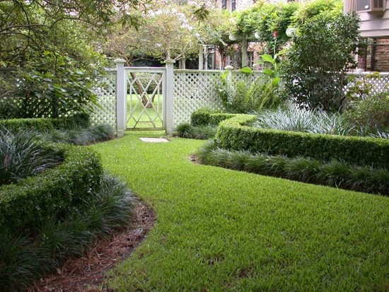 plants for backyard landscaping photo - 2