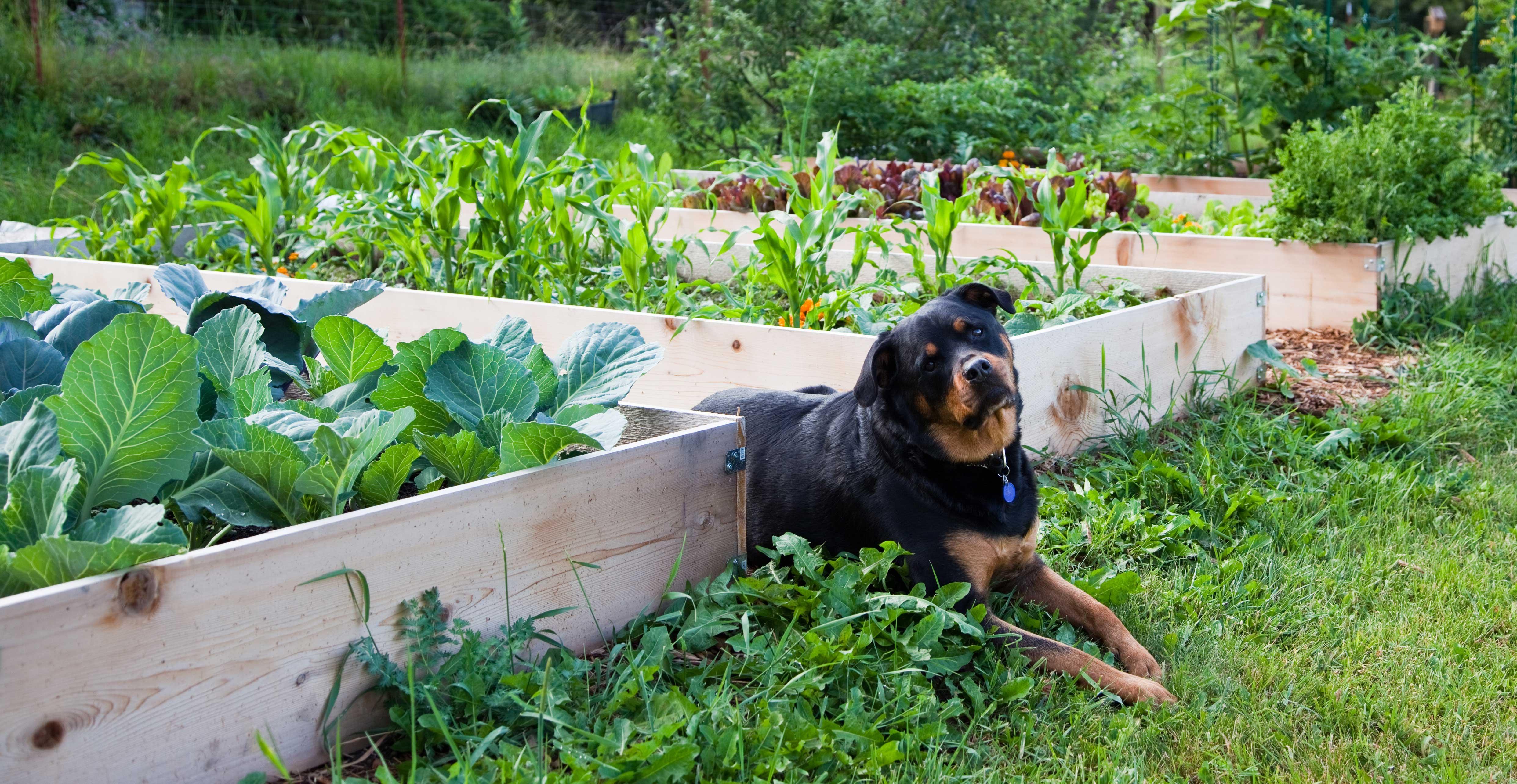 raised garden how to photo - 1