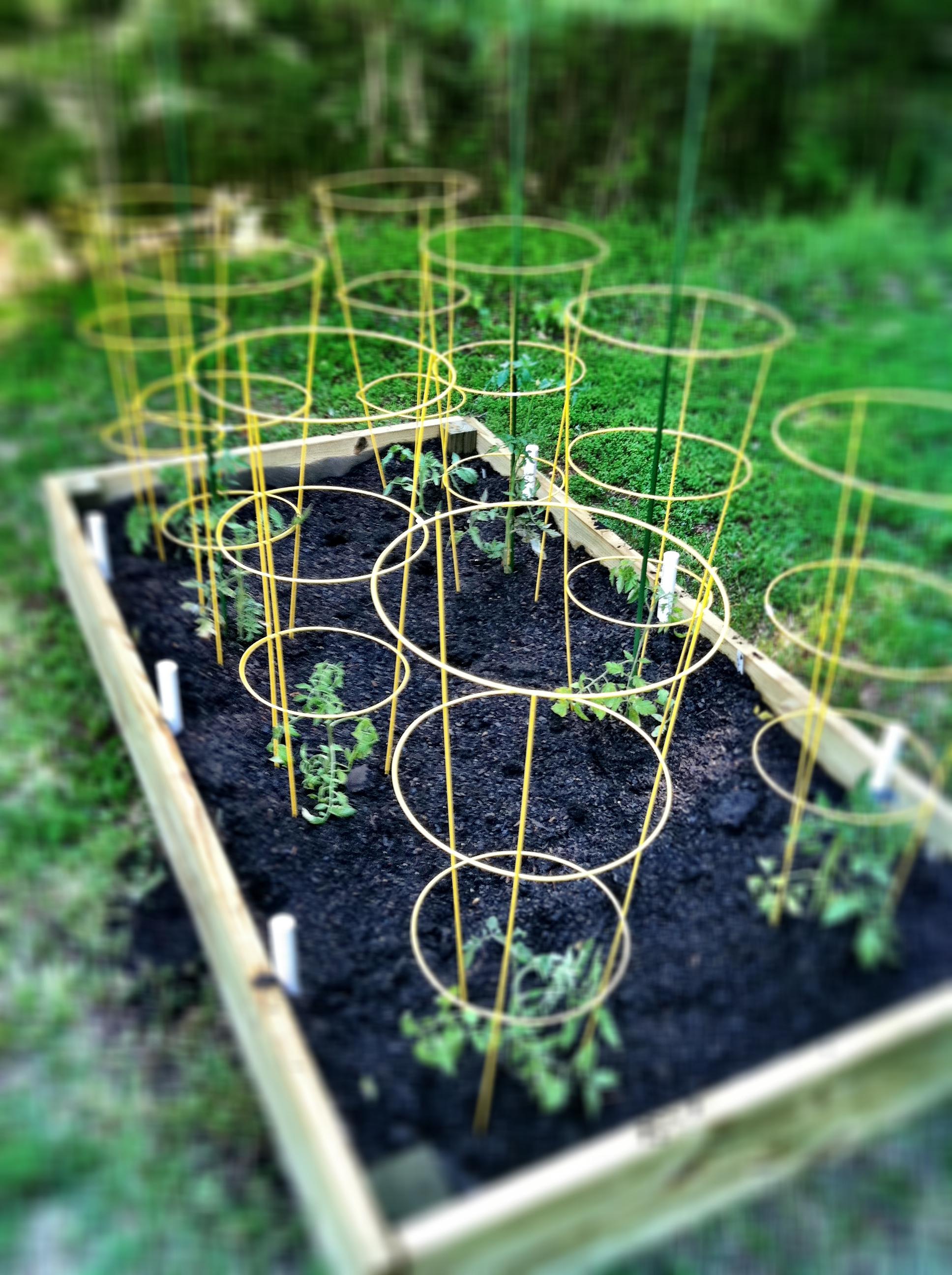 raised garden how to photo - 2