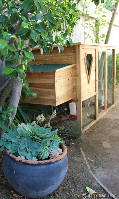 small backyard chicken coop photo - 1