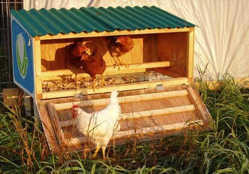small backyard chicken coop photo - 2