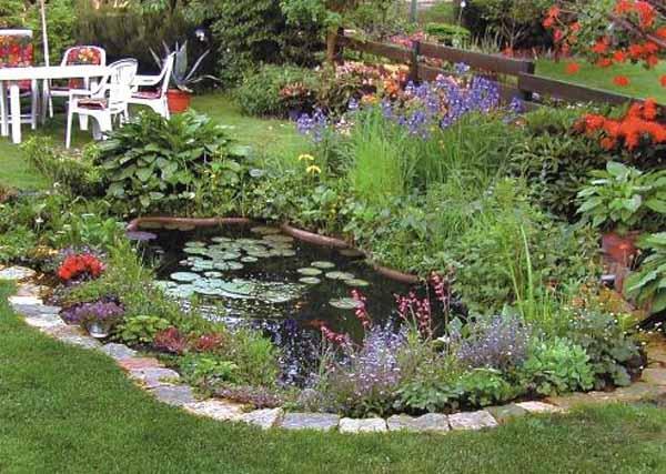 small backyard pond photo - 2