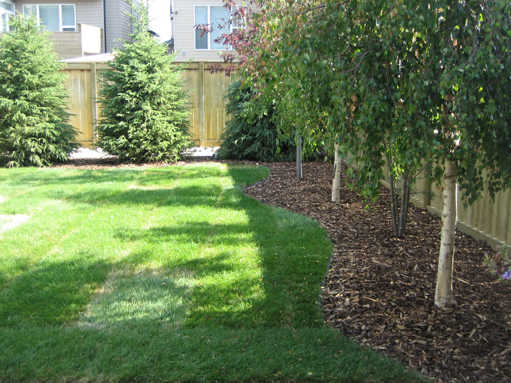Trees for backyard - Trees For Backyard - Large And Beautiful Photos. Photo To Select